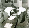 F.F.A. boys inspecting eggs circa 1954