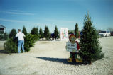 Michigan fir trees at Warren's Christmas tree farm