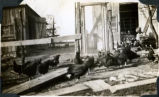 Floyd Smith outside a hen house with many birds circa 1939