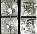 4 F.F.A. scenes in a green house and classroom circa 1959